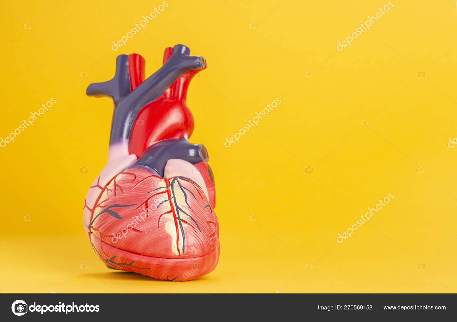 Isolated model of a human heart on yellow background