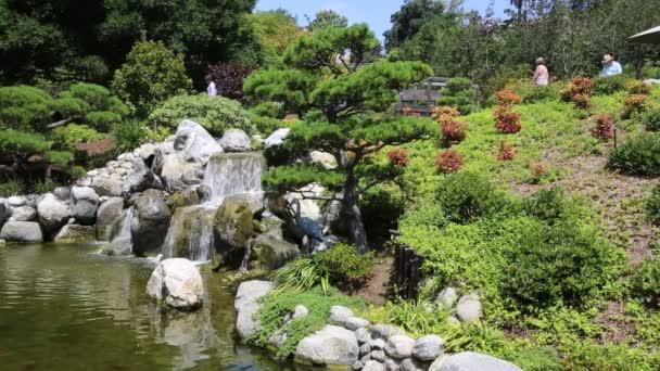 Japonská zahrada - San Diego, Kalifornie