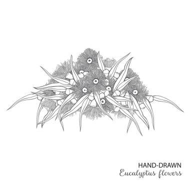 Flowering Eucalyptus hand-drawn bouquet Vector