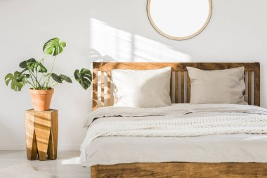 Wooden double bed with white pillows, sheets and knit blanket standing in bright bedroom interior with fresh plant on bedside table and round mirror on the wall