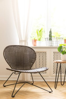 Modern black chair next to table with plant in bright living room interior with window. Real photo stock vector