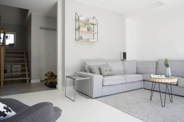 Grey corner couch with wooden table on carpet in monochromatic living room interior. Real photo