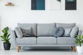 Pohodlné, šedá pohovka s polštáři mezi rostliny proti bílé zdi se malby v interiéru obývacího pokoje