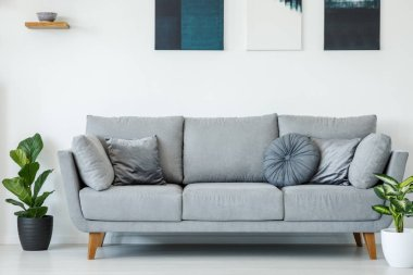 Comfy, grey sofa decorated with pillows between plants against white wall with paintings in living room interior