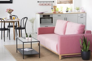 Plant next to pink sofa in apartment interior with chairs at dining table near kitchenette. Real photo