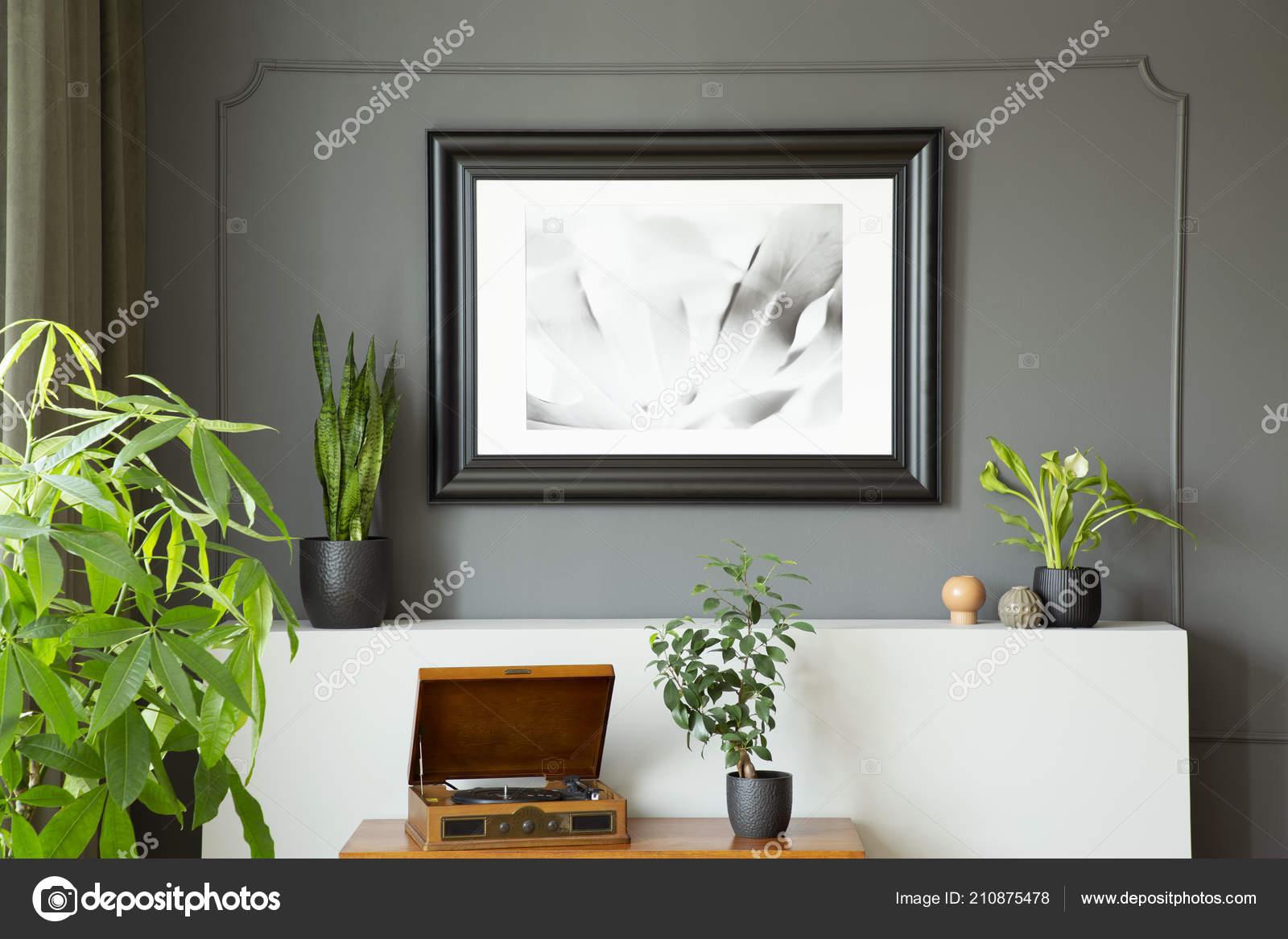 Poster Auf Graue Wand Über Plattenspieler Und Pflanzen Retro ...