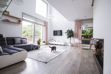 Real photo of a spacious living room interior with a corner sofa, cat, panel floor, fireplace and window with a view of the terrace