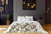 Mintás ágy, hálószoba belső növények, fekete és arany poszter szürke falnak. Valódi fotó