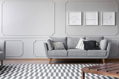 Dog's posters on the grey wall of bright living room with comfortable grey couch with pillows, real photo with copy space
