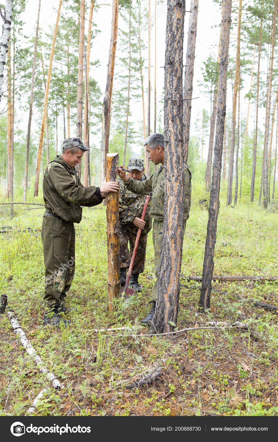 Inspector Forestal Con Grupo Silvicultores Marcando Trama Para ...