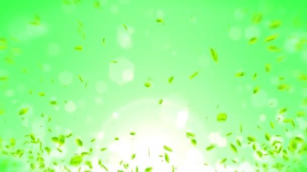 Čerstvé zelené listí, které padá na zelené pozadí. Listové konfety. Opakovat animaci.