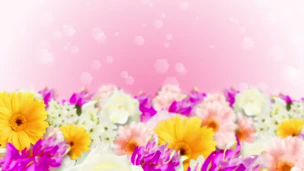 Many colorful flowers loop animation. Rainbow color flowers. Garden filled with multicolored flowers.