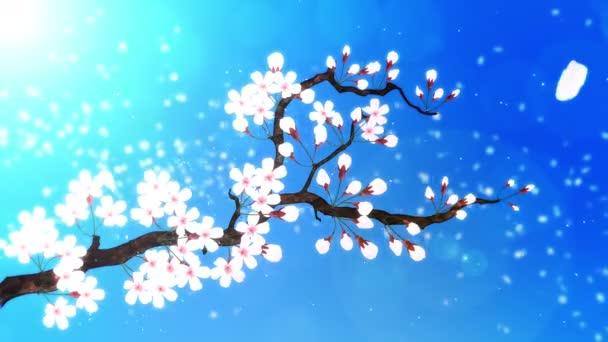 Třešeň v plném květu. Třešňová větev. Sakura má růžové květy. Cherry květ modré pozadí.