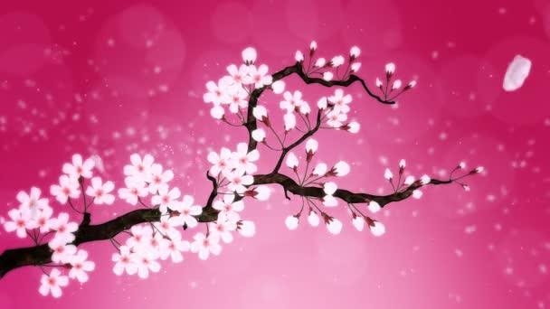 Třešeň v plném květu. Třešňová větev. Sakura má růžové květy. Cherry květ červené pozadí.