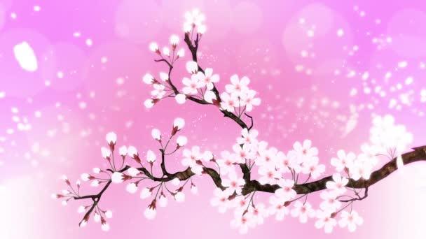 Třešeň v plném květu. Třešňová větev. Sakura má růžové květy. Třešňové květy růžové pozadí.
