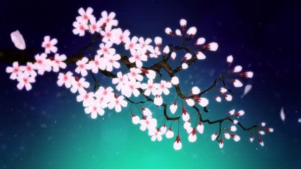 Cseresznyefa virágzik. Cseresznyeág. Sakura virágok rózsaszínűek. Cseresznyevirág zöld háttér.