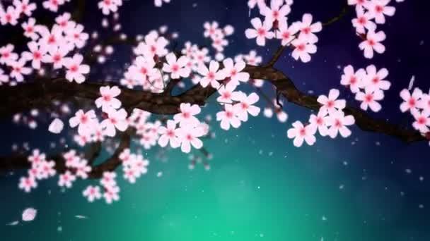 Cseresznyefa virágzik. Cseresznyeág. Sakura virágok rózsaszínűek. Cseresznyevirág zöld háttér. Cg hurok animáció.