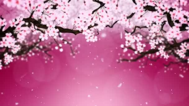 Třešeň v plném květu. Třešňová větev. Sakura má růžové květy. Třešňové květy červené pozadí. Animace smyčky Cg.