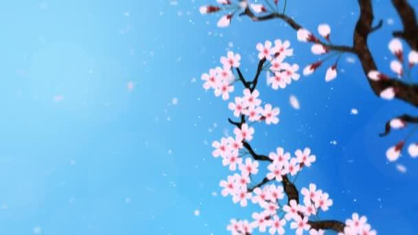 Cseresznyefa virágzik. Cseresznyeág. Sakura virágok rózsaszínűek. Cseresznyevirág kék háttér. Cg hurok animáció.