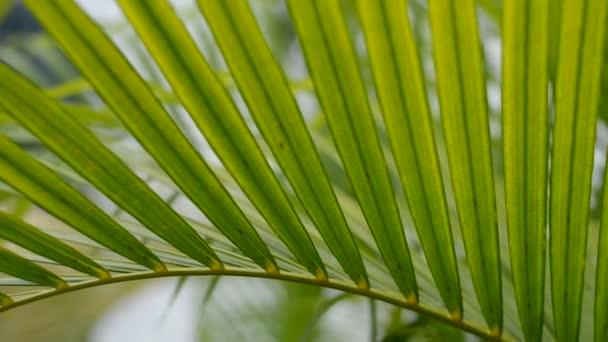 palmového listí zelený list palmy