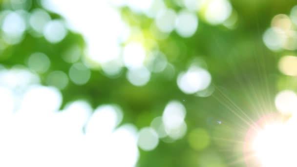 záběry ze slunce svítí skrz větve stromu