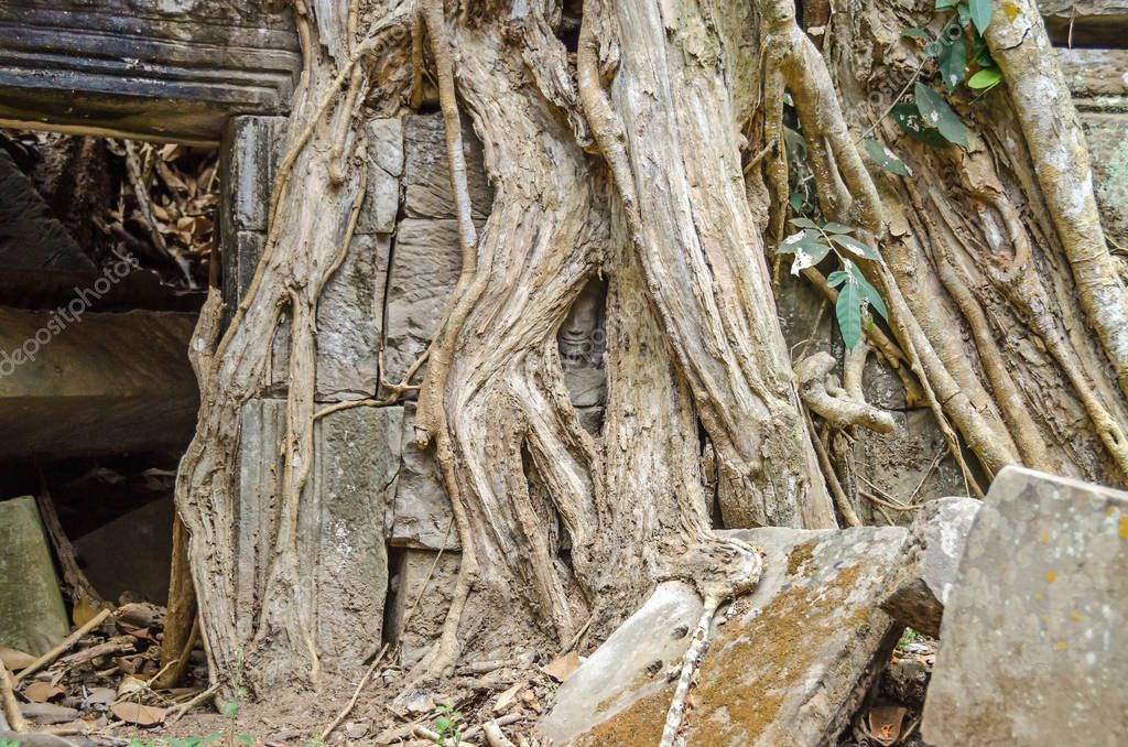 Face of a bar-relief figure hidden deep under the roots of a spung, growing out of the ruins of Ta Prohm temple