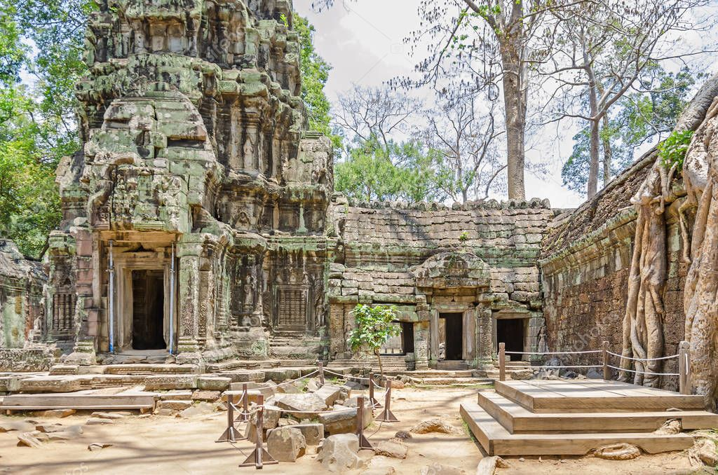 Ruins of temples of Angkor Thom with roots of a spung, the famous tree Tetrameles nudiflora, running along the gallery and destroying its walls