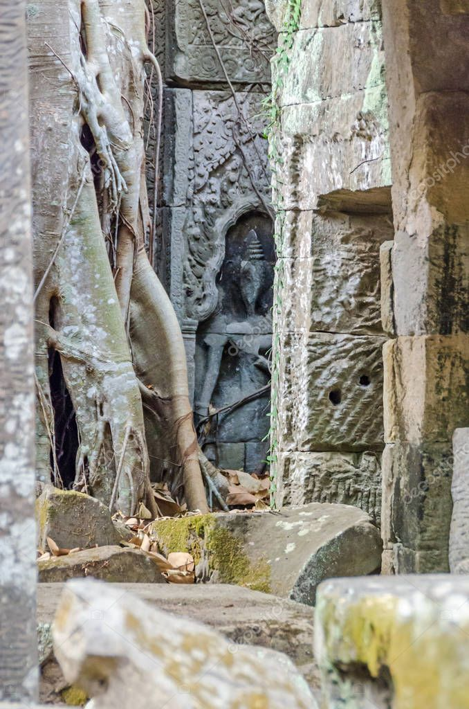 Ruins of temples of Angkor Thom with roots of a spung, the famous tree Tetrameles nudiflora, destroying its walls, and the female divine carved figurine, devata, hidden behind