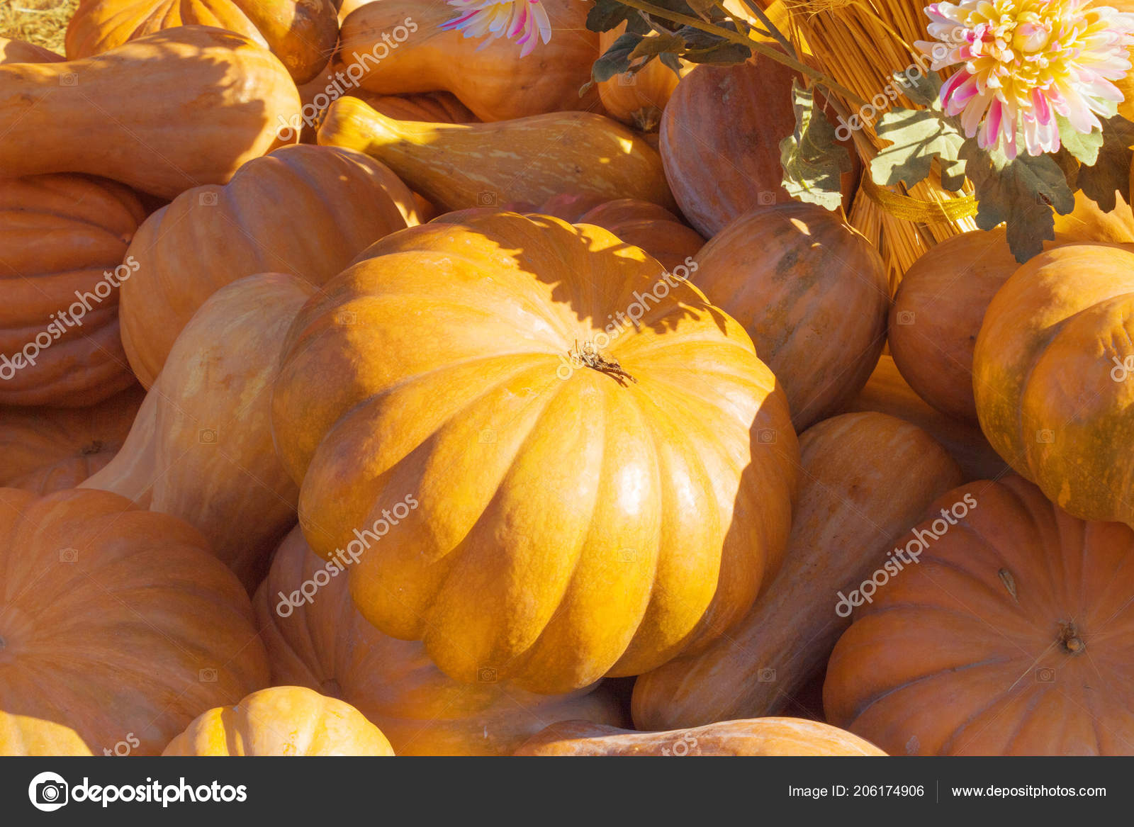 big and small pumpkins stock photo smartape 206174906