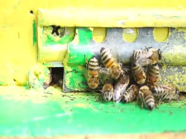 Méhek munkáját, és megvédeni a méhkas. méztermelés. Mezőgazdaság.