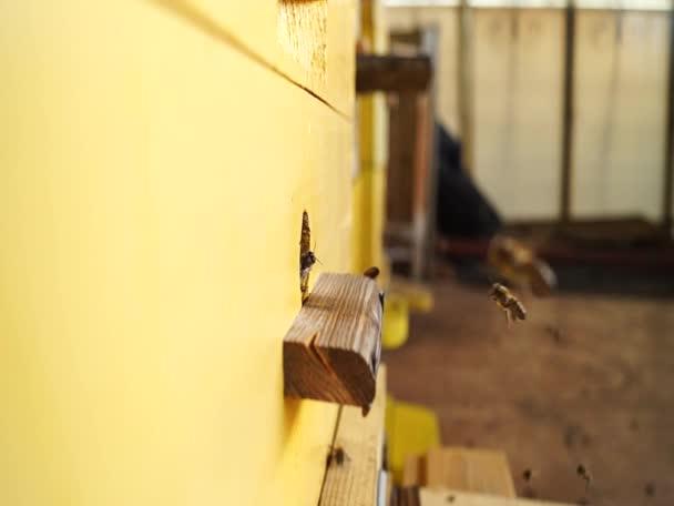 Méhek közelednek. Méhek a méhkasnál. Méhnyáj.
