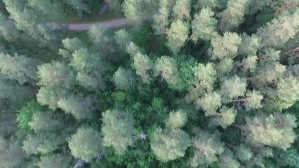 Aerial top view of a beautiful forest or park. Forest road. Eco friendly environment, forest and wildlife, drone shot