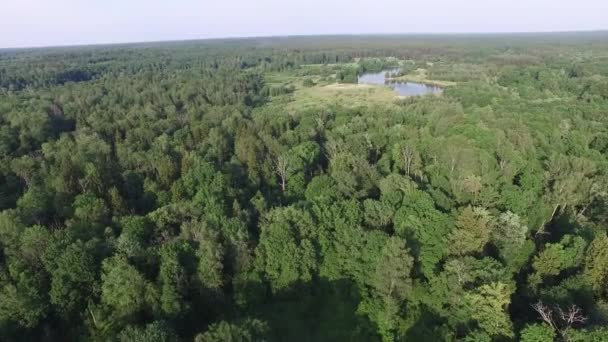 Aerial top view of a beautiful forest or park, a beautiful bend of the river. Eco friendly environment, forest and wildlife, drone shot