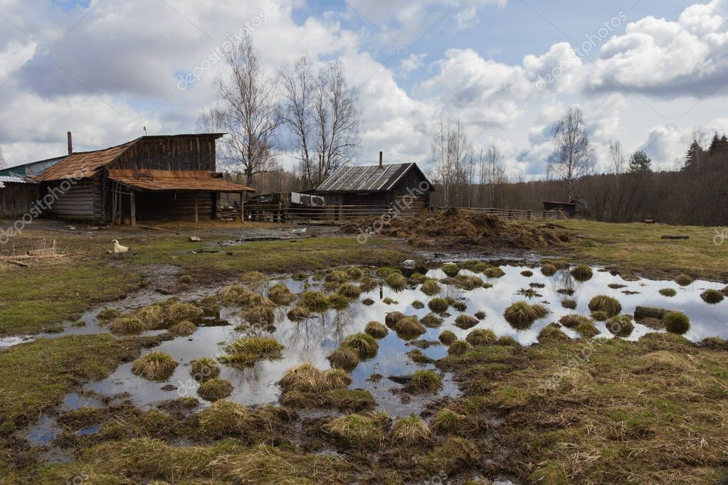 Late fall in russian village, back yard with bathhouse, bare trees, puddles with sky reflections, dried yellow grass, dung heap, barnyard, house and hen