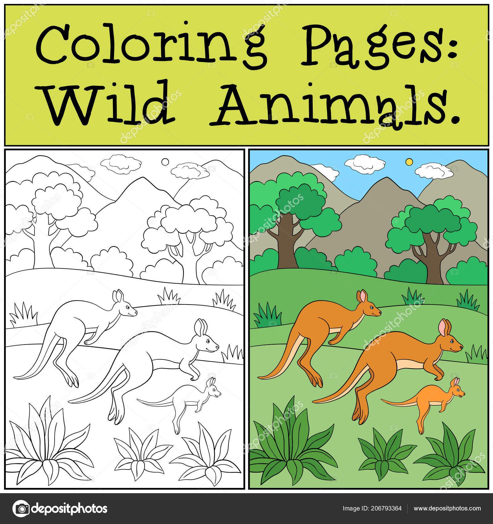 Dibujos Para Colorear Animales Salvajes Las Pistas Familia Canguro