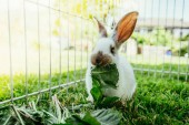 Photo Cute little bunny eats salad in an outdoor compound. Green grass, spring time.