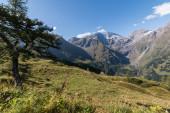 Alpská krajina: louka, Les, hory a modrá obloha