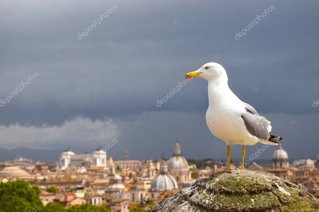 Seagull at the Castel Sant Angelo, Italy