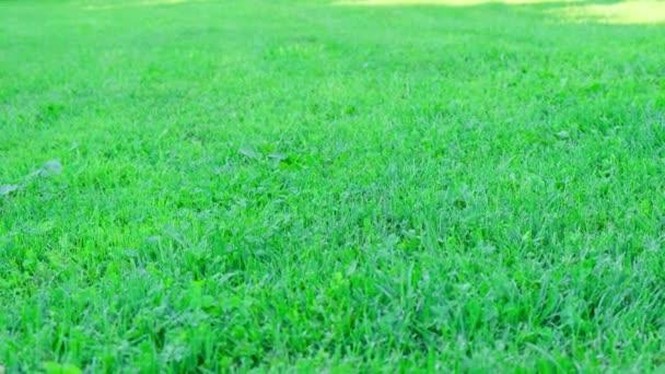 Krásný výhled na zelený trávník, Close up,