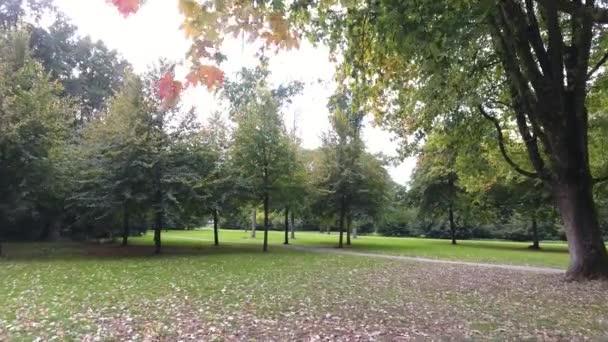 Letecké natáčení podzimní stromy v parku