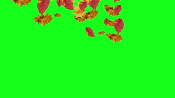Autumn Leaves Falling Green Screen Chroma Key Editable Background Stock Video C Jhnbnk 273263566