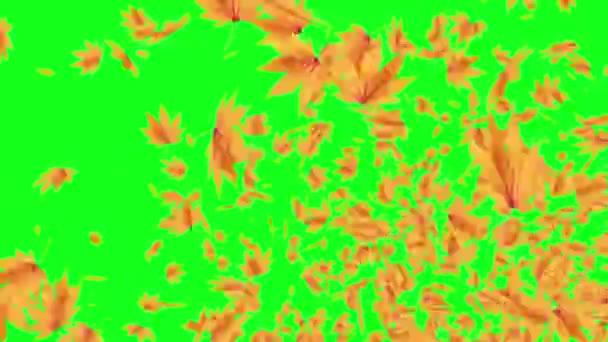 Explosive Autumn Falling Leaves Green Screen Chroma Key Editable Background Stock Video C Jhnbnk 273264396