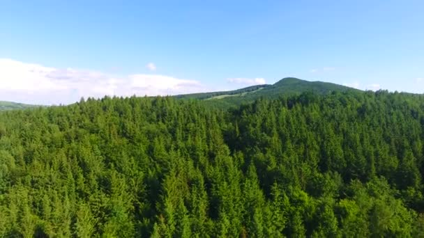 Aerial view of forest hill background, beautiful nature trees landscape