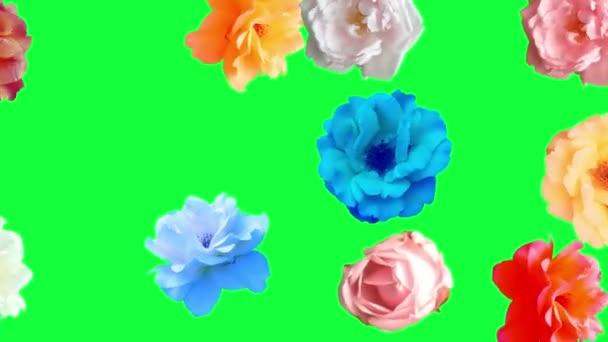 Krásné růže květiny animace, odnímatelné pozadí pomocí chroma klíče, bezešvé smyčky
