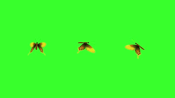 Animated colorful beauty butterfly on green screen chroma key