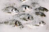 Dorado hal a jégen. friss sparus a hal a jég felülnézet