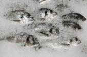 friss hal sparus jégen felülnézetben. sok hal a jégen értékesítési koncepció