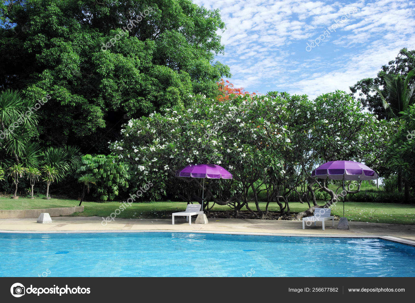 Swimming Pool Tropical Garden Sunny Day Thailand – Stock Editorial ...