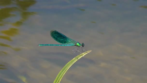 close-up footage of dragonfly sitting over pond