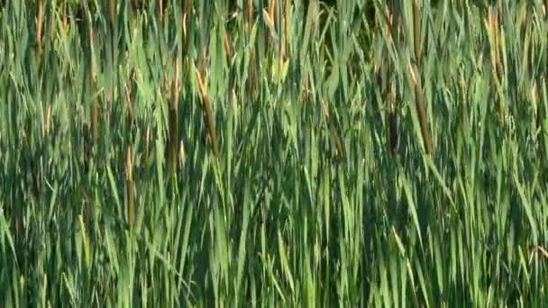 close-up footage of green grass waving on wind